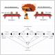 Exemple tutoriel - modèlisation et simulation avec PIPE2