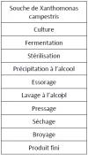 Le process de fabrication de la gomme xanthane.