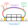 Schéma des éléments structuraux