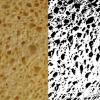 Photo d'une éponge analysée grâce à ImageJ