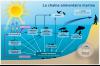 Chaîne alimentaire marine